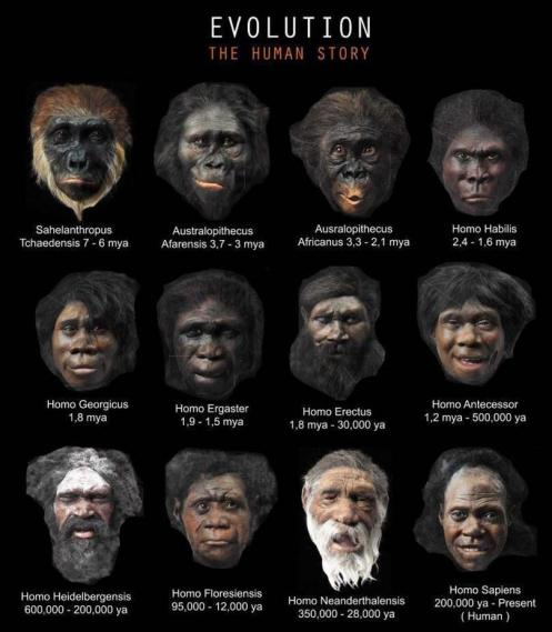 Evolution The Human History