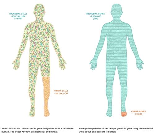 Qué es el hombre 2 (bacterias y hongos)